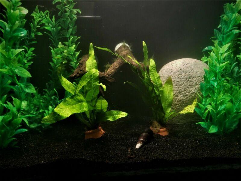 6 Pound Black Fine Sand Substrate for Aquarium Terrarium Garden >2k lbs. sold