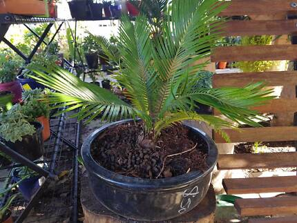 large garden pots for sale garden gumtree australia free local classifieds. Black Bedroom Furniture Sets. Home Design Ideas