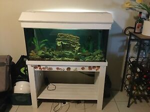 Fish tank Mermaid Beach Gold Coast City Preview