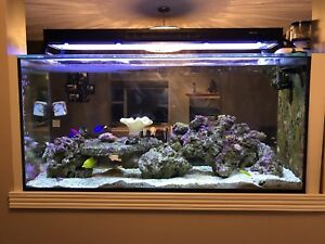 100 gallon aquarium salt fish tank