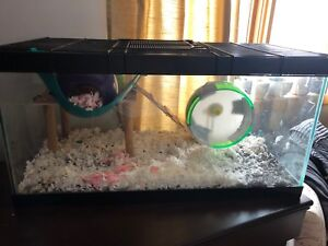 Hamsters & Cage for sale