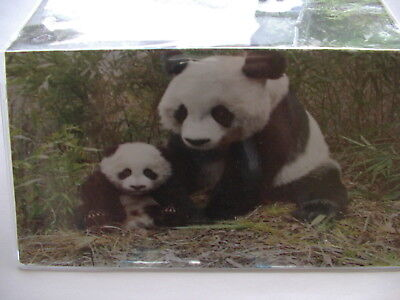 Momma and baby Panda Bear vinly Checkbook cover - Panda Checkbook Cover