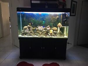 500L fish tank Sinagra Wanneroo Area Preview