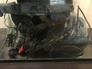 10 gal fish tank everything included excellent cont