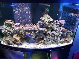 real reef live rock fiji pukani tonga etc marine saltwater coral