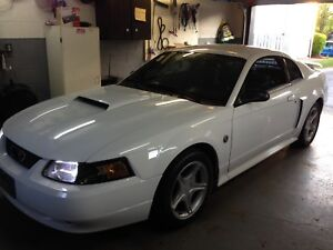 Mustang for sale or trade