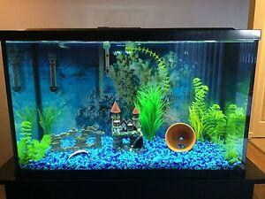 30 Gallon Aquarium With Essentials