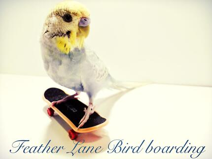 Feather lane bird boarding Rowville Knox Area Preview