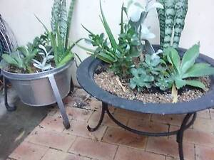 Succulents and stand available 40 ea 70 the pair Wembley Cambridge Area Preview