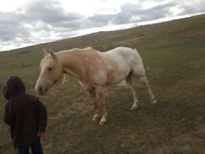 15 year old horse