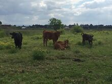 Cattle agistment or paddock lease wanted minimum 5 acres Windsor Hawkesbury Area Preview