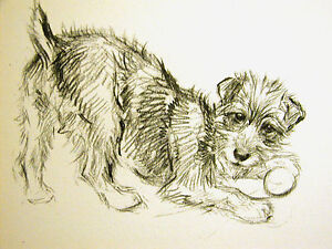 K-F-Barker-1933-TERRIER-or-MIXED-BREED-Playing-w-Ball-Vintage-Dog-Print-Matted