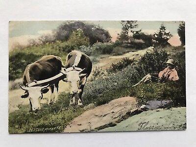Antique 1907 Postcard Newark Asbury Park NJ Oxen Cow Scene