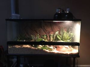 REDUCED PRICE BALL PYTHON AND ACCESSORIES