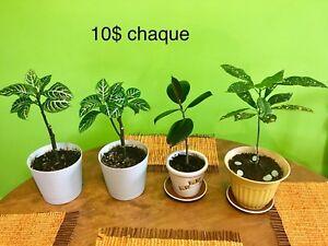 Belles plantes d'intérieur à vendre