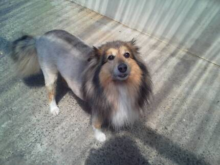 Shearing Shed Sutherland Shire Mobile Dog Grooming Business