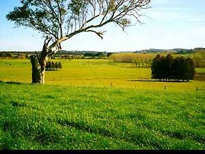 Land / Paddock wanted to lease Longford Northern Midlands Preview