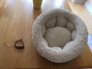 Cat Bed & collar