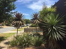 Palm trees Narre Warren South Casey Area Preview