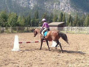 REDUCED! lovely quarter horse mare