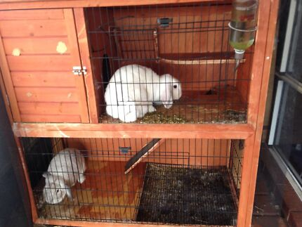 2 rabbits + hutch FREE Quinns Rocks Wanneroo Area Preview
