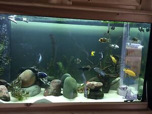 90 gallon with stand and canopy  Cambridge Kitchener Area image 1