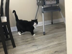 Female sisters need new home ASAP
