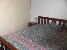 RENTAL ACCOMMODATION FOR FUN-LOVING, MATURE ADULTS & STUDENTS Clovelly Park Marion Area Preview