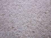 Carpet - Wool Berber Toowoomba Toowoomba City Preview