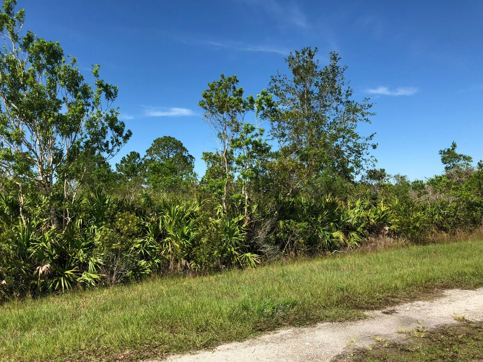 0.31 Acre Central Florida Land Lot Near Lake Wales, FL Bidding On Full Price NR - $255.00