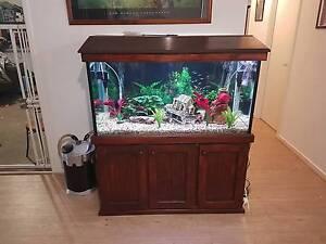 4FT Tropical Aquarium setup Cranbourne East Casey Area Preview