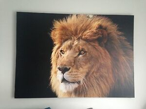 Large Lion Painting