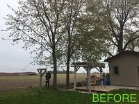 Tree Removal and Yard works