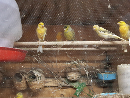 Various types of canaries