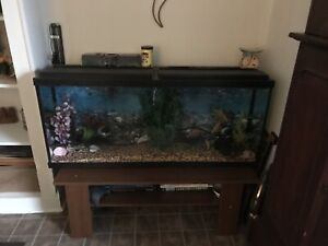 Fish tank as is