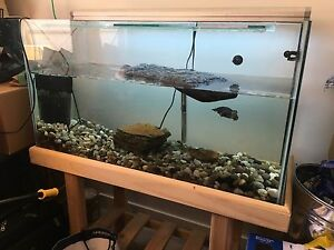 A long necked turtle Caulfield South Glen Eira Area Preview
