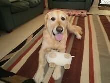 DOG SITTERS AVAILABLE Rockingham Rockingham Area Preview