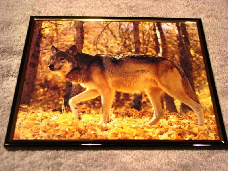 WOLF 8X10 FRAMED PICTURE PRINT #5