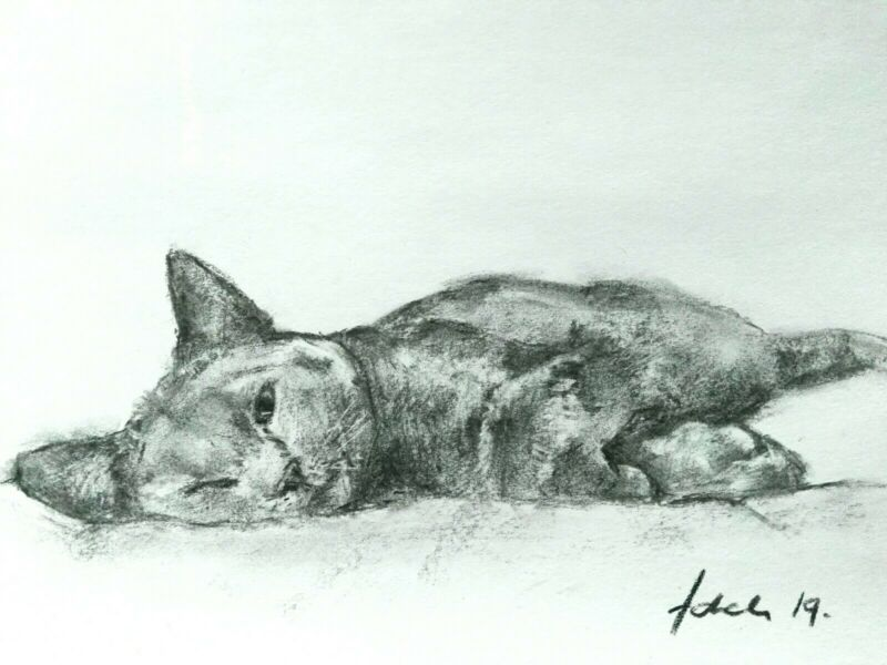 Sleeping+Cat+Charcoal+Drawing+On+Derwent+White+Paper+A4+Original+Art