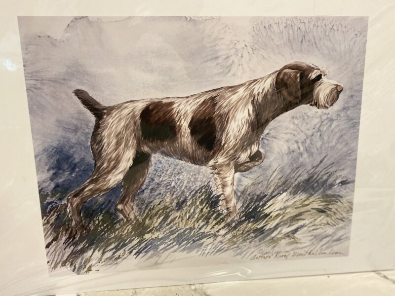 German Wirehaired Pointer Ltd Edition 11x14 Print By Van Loan
