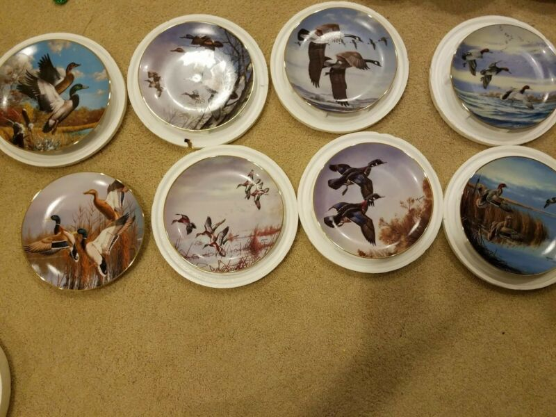 8x Duck Hunting collector plates by David Maass (Collectable and nice, Free Ship