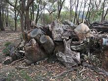 FREE MIXED FIREWOOD - Mainly large gum trunks Terrey Hills Warringah Area Preview