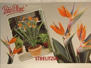 Paraiso-flores-pajaros-Strelitzia-reginae-Plantas-habitacion-Envio-de-flores