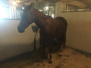 Appendix mare ready for career!