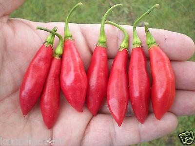 20  Trinidad Beans Pepper Seeds