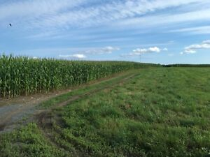 Farm land wanted to rent or purchase.