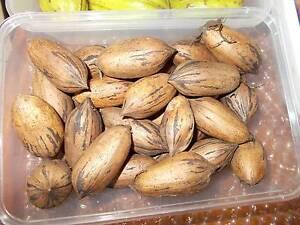 PLANTS PECAN NUT TREES NUTS FRUIT TREES PLUS OTHER PLANTS Maida Vale Kalamunda Area Preview