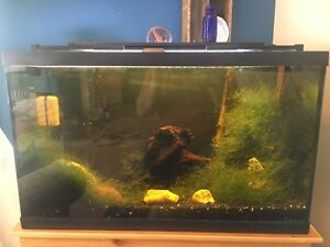 29 gallon aquarium