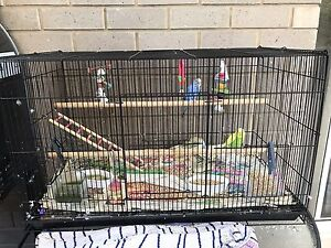 Bird cage and Two Budgies for sale Osborne Port Adelaide Area Preview