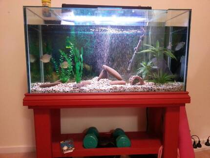 FISH TANK, STAND AND ACCESSORIES Devonport Devonport Area Preview